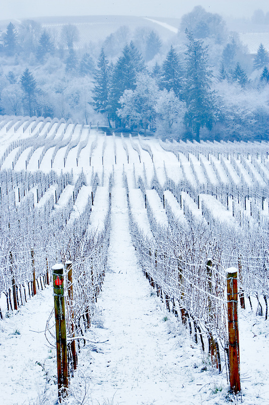 Sokol Blosser Vineyards with snow. Oregon