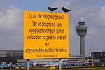 SCHIPHOL - Op vliegveld Schiphol zitten twee vogels, kauwen, op een waarschuwingsbord met de volgende waarschuwende tekst: In verband met de vliegveiligheid en ter voorkoming van vogelaanvaringen is het verboden vogels te voeren en etensresten achter te laten, directie Schiphol. ANP PHOTO COPYRIGHT TON BORSBOOM