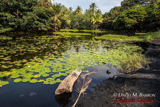 Pond With Lily Pads Ajacent To Punalu'u Black Sand Beach