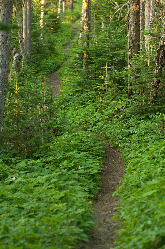 Hiking trail at Isle Royale National Park.
