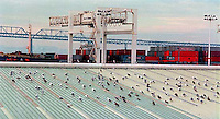 Pigeons and Port of Oakland and Bay Bridge, 1987.   &amp;#xA;<br />