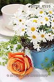Helga, FLOWERS, nature  photos, DTTH4510,#F# Blumen, Natur, flores, naturaleza