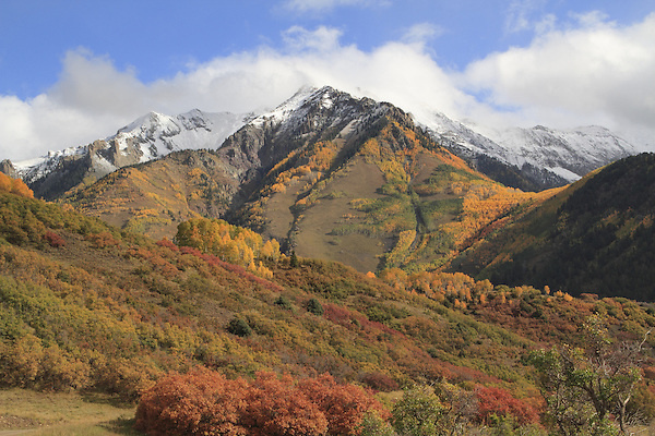 San Juan Mountains and Aspen trees, autumn, Colorado.