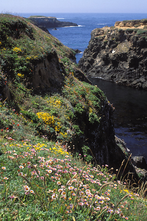 Wildflowers on the Mendocino Headlands state park,  Mendocino California