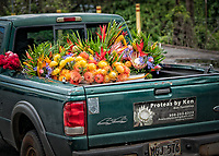 After a long, monochrome winter in Truckee, Upcountry Maui was such a welcome scene. After we visited the Kula Botanical Gardens, we saw @proteabyken delivering flowers in town - like something from a dream…