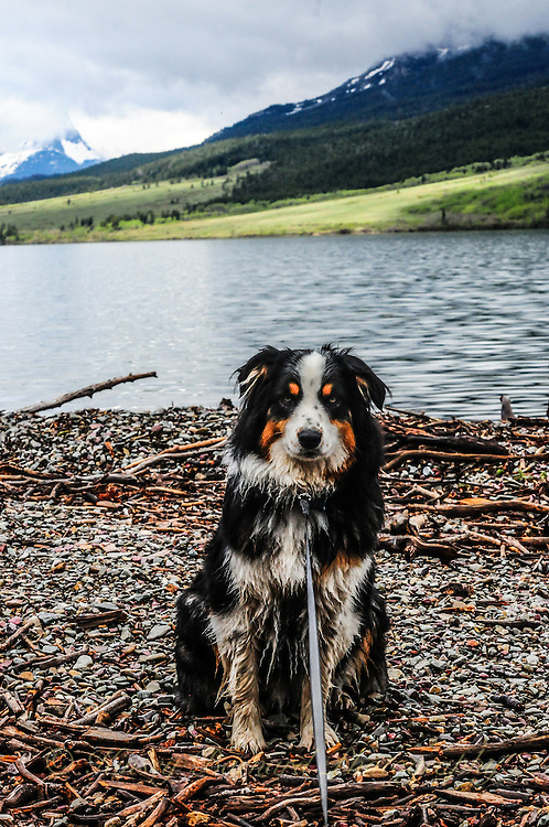 Molly Montana at St. Mary Glacier National Park