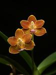 2017_12_23 Orchids