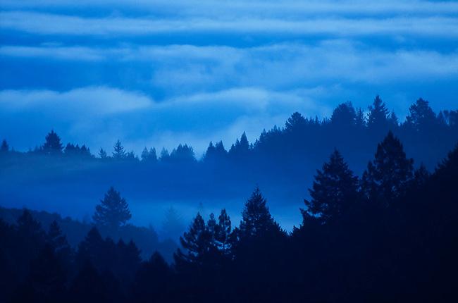 Morning fog in Napa Valley
