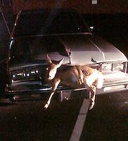 17/11/09 Deerie deerie me....
