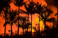 palm trees in Leilani Community Park are silhouetted against the glow from fountaining lava at fissure 8 (Puka Ewalu) of the Kilauea Volcano east rift zone in Leilani Estates subdivision, near Pahoa, Big Island, Hawaii, USA