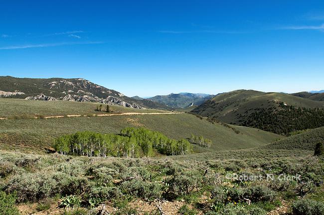 Upper Duck Creek area near Ely, Nevada