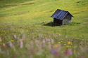 Hay barn in alpine meadow. Nordtirol, Austrian Alps, Austria, June.