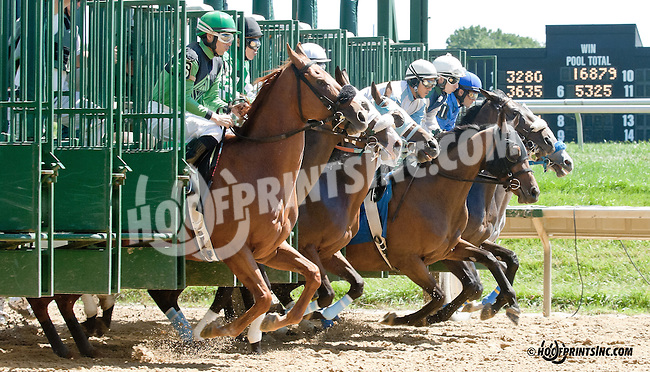 Robin's Kisses winning at Delaware Park on 9/4/13