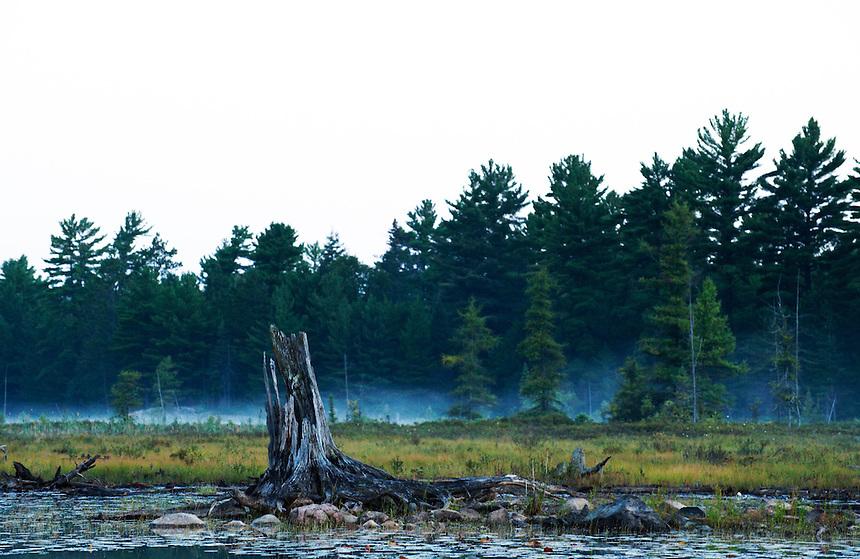 Morning mist on the marsy shores of Balsam Lake, Killarney Provincial Park, Ontario, Canada