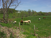 Horses in a field.Loudoun County Virginia.