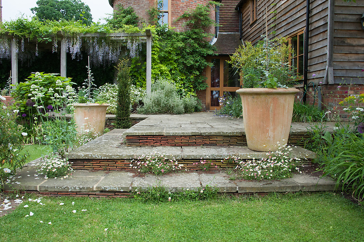 York stone and brick tile steps with terracotta planters, Tidebrook Manor, East Sussex, early June.