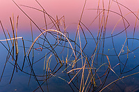 Reeds at sunrise<br />