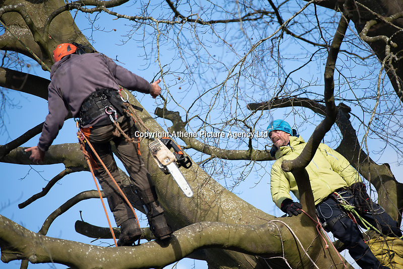 Pictured: A crew approaches a climate protester who chained himself onto a tree in Cardiff, Wales, UK.<br /> Re: A man was arrested following a stand-off between developers and climate change protesters over the felling of two 150-year-old trees in the Canton area of Cardiff, Wales, UK.<br /> More than 100 protesters gathered at Suffolk House on Sunday to stop the lime and copper beech trees being chopped down.<br /> An Extinction Rebellion campaigner chained himself to one of the trees, but he was later lifted down.<br /> A local man, aged 49, was arrested on suspicion of aggravated trespass.<br /> South Wales Police said on Monday morning that he remained in custody.