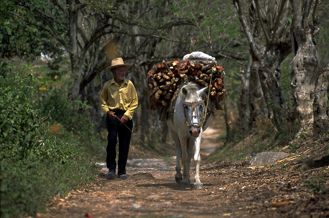 a man caries wood on the back of his horse in rural Honduras