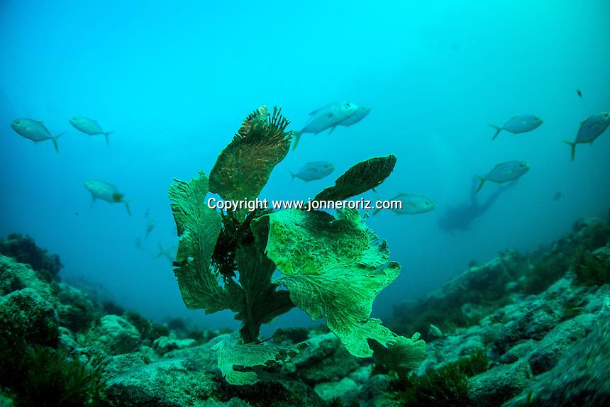 ABROLHOS / BA - 02/08/2013 - Fotos do Arquip&eacute;lago de Abrolhos no sul da Bahia. &Eacute; constitu&iacute;do por cinco ilhas, estando a trinta e seis milhas n&aacute;uticas (aproximadamente setenta e dois quil&ocirc;metros) da costa de Caravelas. O Arquip&eacute;lago possui &aacute;reas intang&iacute;veis, ou seja, o desembarque nestas ilhas &eacute; proibido.<br /> As ilhas est&atilde;o dispersas numa &aacute;rea total de 913 km&sup2;, &aacute;rea que pertence ao Parque Abrolhos - Parque Nacional Marinho, estando sob o controle do ICMBio e com apoio da Marinha do Brasil. O arquip&eacute;lago dos Abrolhos foi a primeira &aacute;rea do Brasil que recebeu o t&iacute;tulo de &quot;Parque Nacional Marinho&quot;, em 6 de abril de 1983. Foto Jonne Roriz