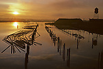 Sunrise over slough with silhouetted pilings and lumber on waterway with water tower, Everett, Washington State USA