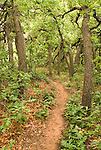 Betatakin ruins--trail through the oak trees...Navajo National Monument, Arizona