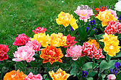 Luiz, FLOWERS, photos, BRLH8709,#f# Blumen, Natur, flores, naturaleza