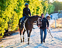 BALTIMORE, MD - MAY 15: Kentucky Derby winner Always Dreaming returns from the track with exercise rider Nick Bush after exercising in preparation for the Preakness Stakes this week at Pimlico Race Course on May 15, 2017 in Baltimore, Maryland.(Photo by Scott Serio/Eclipse Sportswire/Getty Images)
