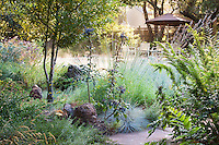 Morning light in California native plant habitat garden next to swimming pool, with grasses and shrubs