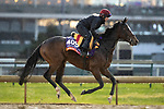 November 1, 2018: Magic Wand (IRE), trained by Aidan P. O'Brien, exercises in preparation for the Breeders' Cup Filly & Mare Turf at Churchill Downs on November 1, 2018 in Louisville, Kentucky. Alex Evers/Eclipse Sportswire/CSM