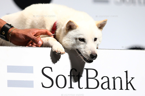 SoftBank's mascot dog attends the new TV commercial press conference in Tokyo, Japan on June 16, 2016. (Photo by Shingo Ito/AFLO)