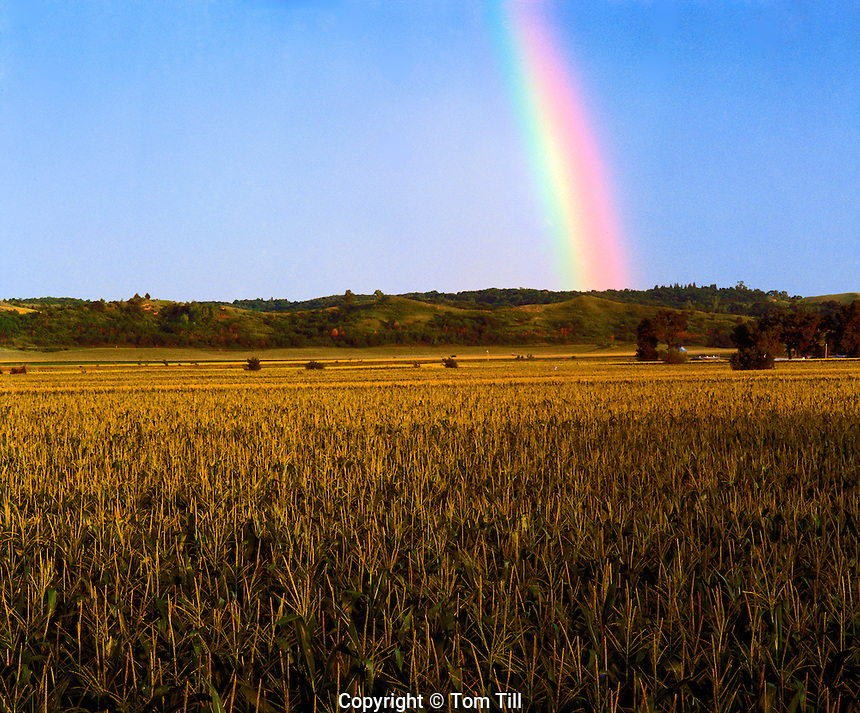 Cornfield rainbow  Woodbury Country, Iowa  Farmlands near Missiuri River  July  Afternoon