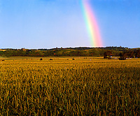 Cornfield rainbow  Woodbury Country, Iowa  Farmlands near Missiuri River  July  Afternoon