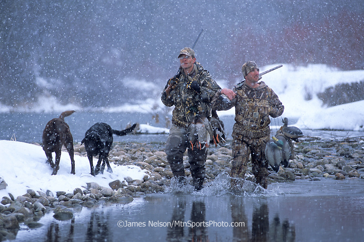 34-701. Waterfowlers, with Labrador retrievers, walk in a snowstorm after after a successful duck hunt on the South Fork of the Snake River, Idaho.