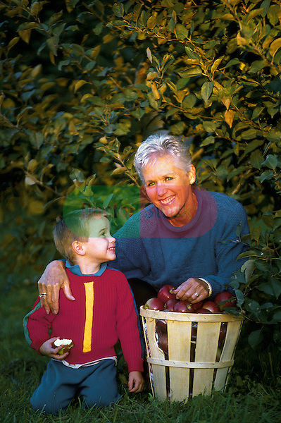 attractive grandmother picking apples in orchard with grandson