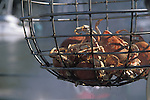 Crabs in a crab trap, Fort Bragg California