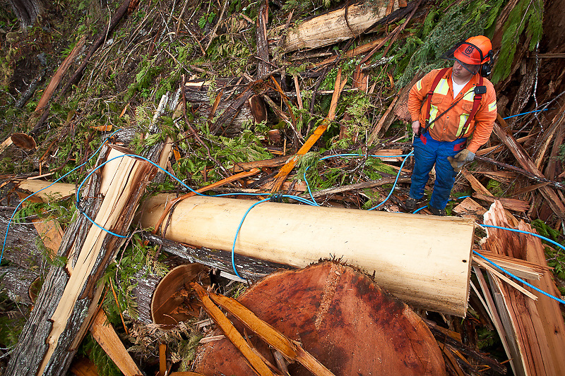 """Foreman/supervisor Tim Walker looks over a turn of Western Red Cedar in the Bute Inlet area. A recent report in Truck Logger Magazine (Winter 2012) notes that cedar """"generates four times more jobs than any other species"""" on the coast."""