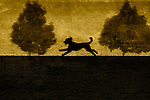 A dog running between two small trees