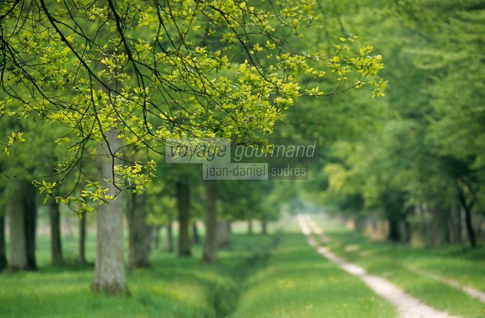 Europe/France/Centre/Sologne/41/Loir-et-Cher/Chambord: Le domaine national de Chambord - Détail d'une allée en forêt