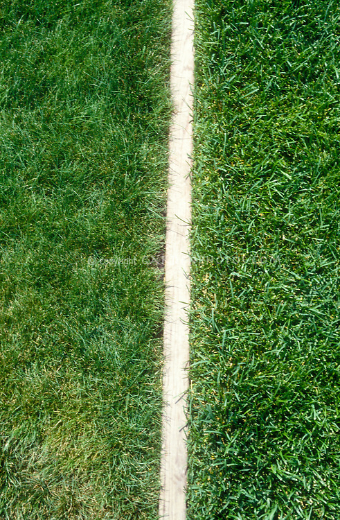 Chewings Fescue Grass 'Banner' (left) compared to Kentucky Bluegrass 'Abbey' (right)