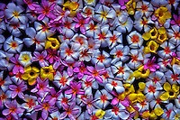 Flowers in a Spa Bath, Palau, Micronesia