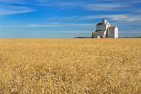 Grain elevator and wheat field<br /> Lang<br /> Saskatchewan<br /> Canada