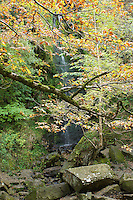 The waterfall, Mallyan Spout, near Goathland, the North Yorkshire Moors, England, seen through a curtain of autum leaves.