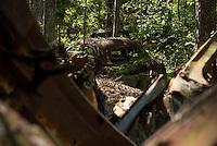 Zerfallende Oldtimer auf dem Autofriedhof Kyrkoe Mosse. Der Autiofriedhof ist ein beliebtes Ausflugsziel und wird von den Besuchern sehr pfleglich behandelt. Trotz Erwaehnungen in diversen Reisefuehren liegt dort weder Muell, oder ist Graffiti auf den alten Autos zu finden.<br /> 3.7.2015, Kyrkoe Mosse/Schweden<br /> Copyright: Christian-Ditsch.de<br /> [Inhaltsveraendernde Manipulation des Fotos nur nach ausdruecklicher Genehmigung des Fotografen. Vereinbarungen ueber Abtretung von Persoenlichkeitsrechten/Model Release der abgebildeten Person/Personen liegen nicht vor. NO MODEL RELEASE! Nur fuer Redaktionelle Zwecke. Don't publish without copyright Christian-Ditsch.de, Veroeffentlichung nur mit Fotografennennung, sowie gegen Honorar, MwSt. und Beleg. Konto: I N G - D i B a, IBAN DE58500105175400192269, BIC INGDDEFFXXX, Kontakt: post@christian-ditsch.de<br /> Bei der Bearbeitung der Dateiinformationen darf die Urheberkennzeichnung in den EXIF- und  IPTC-Daten nicht entfernt werden, diese sind in digitalen Medien nach &sect;95c UrhG rechtlich geschuetzt. Der Urhebervermerk wird gemaess &sect;13 UrhG verlangt.]
