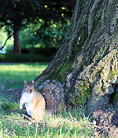Stock image: Squirrel standing near a tree bark on grass looking on her side.