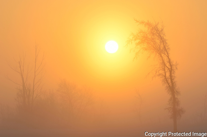 Trees in fog at sunrise<br /> Winnipeg<br /> Manitoba<br /> Canada