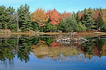 Beaver pond in the Fall, Acadia National Park, Maine, USA