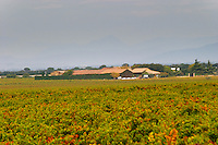 The Domaine de Beaucastel and vineyards. Chateau de Beaucastel, Domaines Perrin, Courthézon Courthezon Vaucluse France Europe