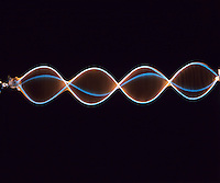 STANDING OR TRANSVERSE WAVE IN VIBRATING CORD<br /> Four Waves<br /> As result of the relationship between frequency of wave, wavelength &amp; tension of cord. Adjustment of tension has resulted in four waves.