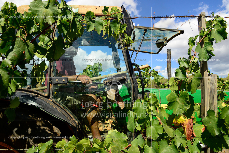 SPAIN Mallorca, Binissalem, Finca Biniagual, wine grape harvest of Manto Negro, John Deere tractor for transport of grapes to the winery / SPANIEN Mallorca, , Binissalem, Finca Biniagual, Weinernte der Traubensorte Manto Negro